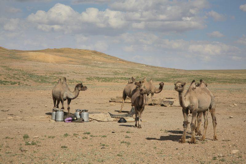 Time Lapse Mongolia