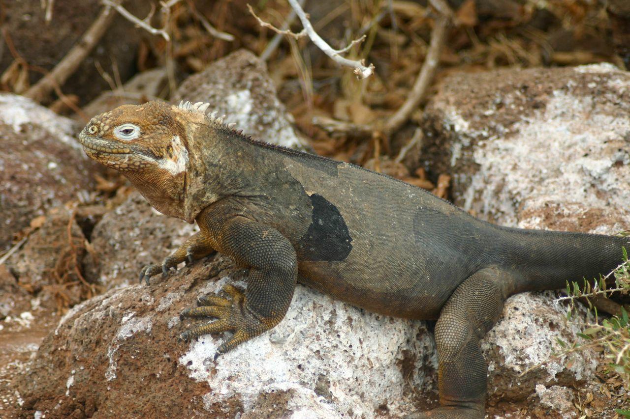 Galapagos-1-44