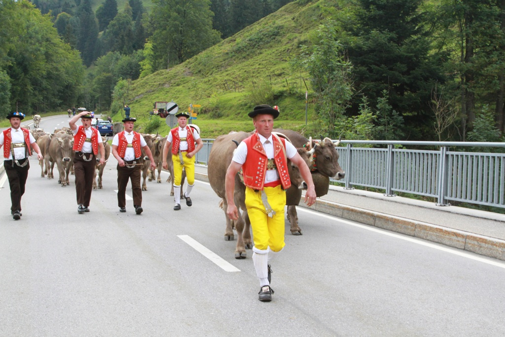 In Switzerland - The Cows Coming Home