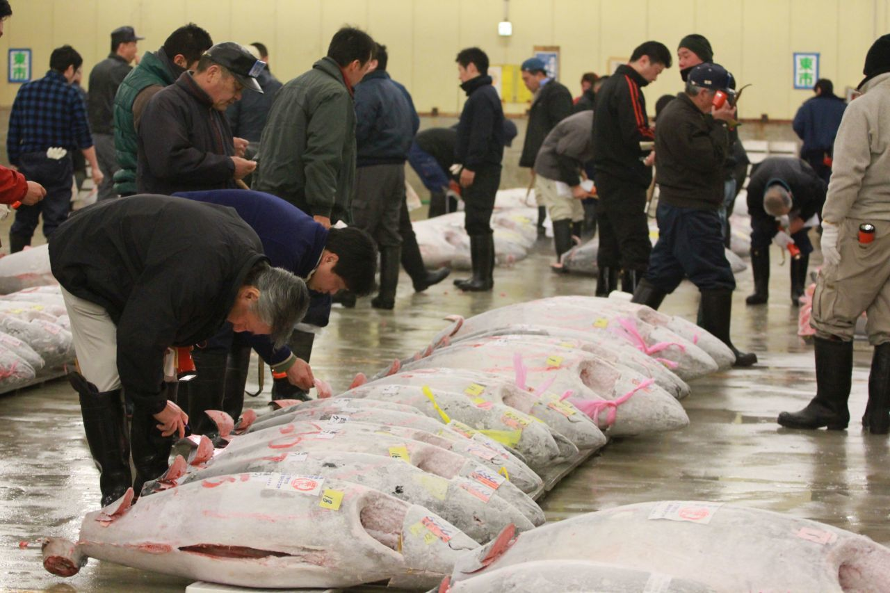 Everyday at the Oksana Fukyu Center in Tokyo, you can witness this Japanese fish auction.