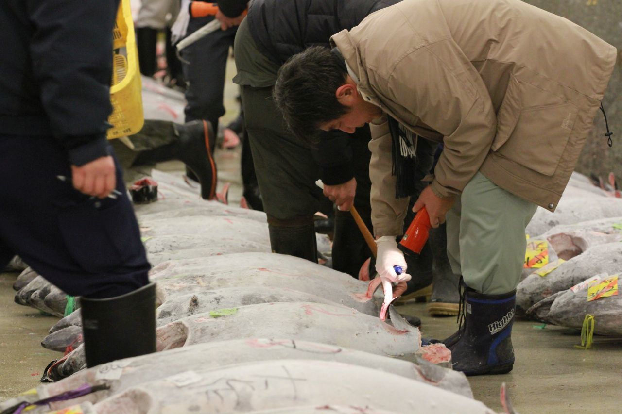 There's no bigger fish market than Tsukiji, and it's famous for its tuna auction. This man is inspecting a tuna.
