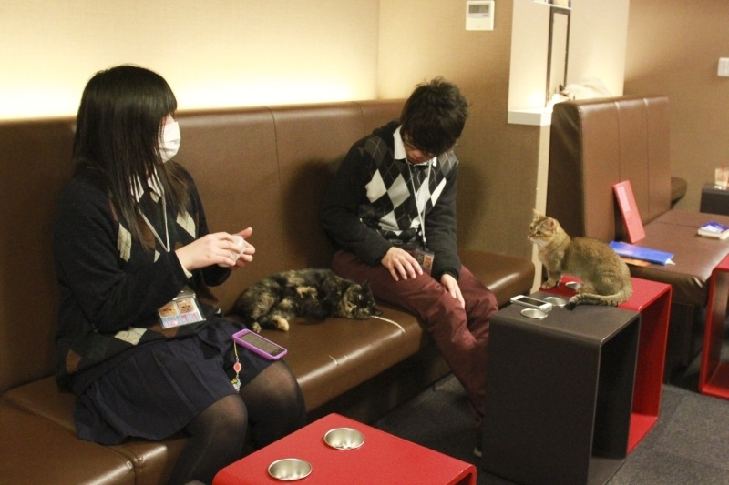 A young couple pat 2 cats at the Cat Café Tokyo