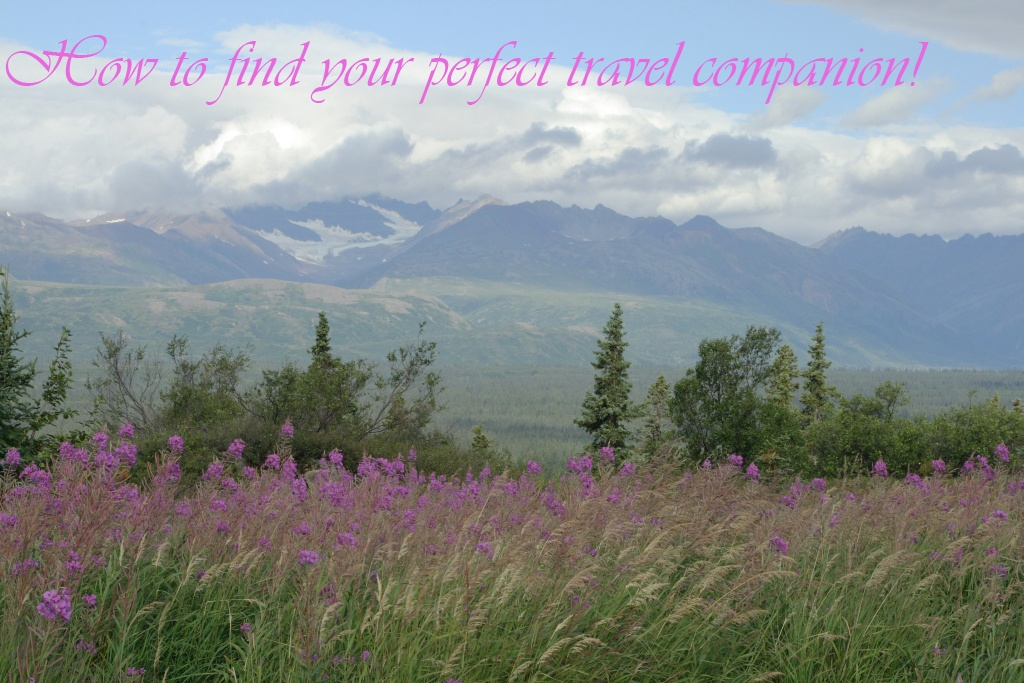 Pick the best #travel companion