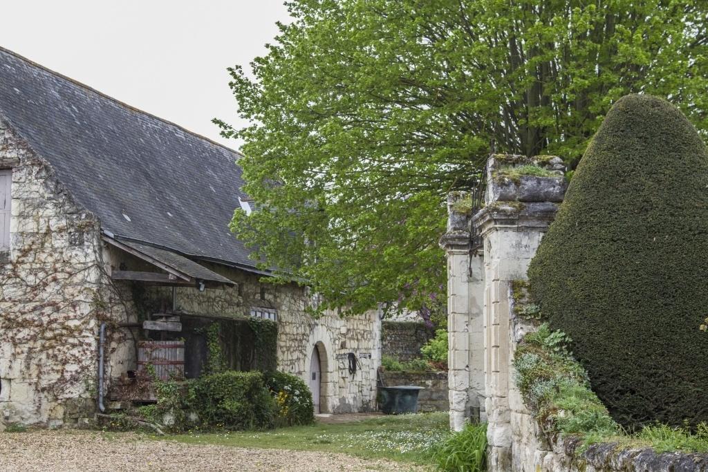 Wine Yard Languedoc