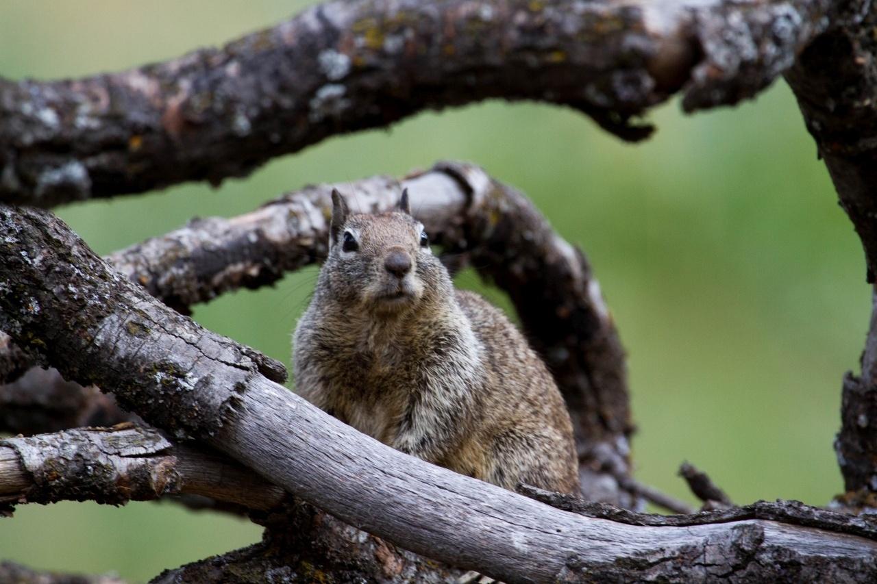 Yosemite wildlife viewing