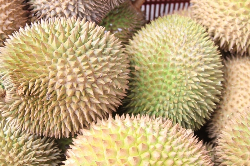 A pile of spiky fresh durian fruit.