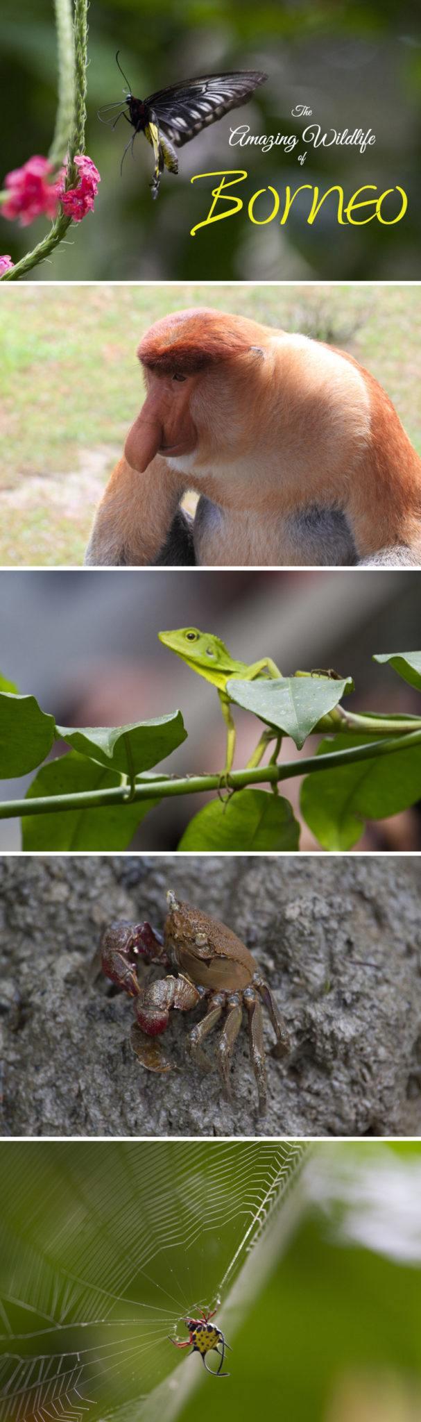 Read: Wildlife of Borneo