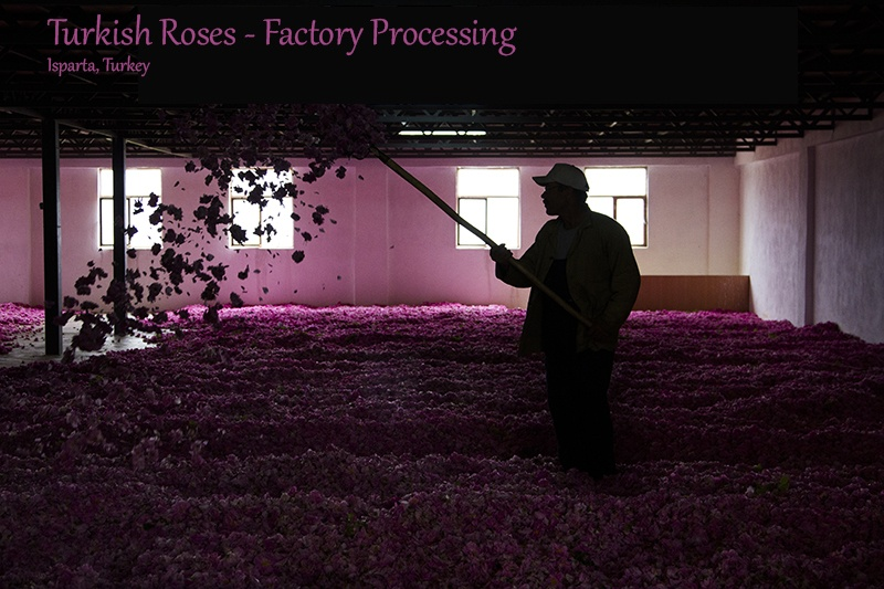 Turkish Roses - Factory
