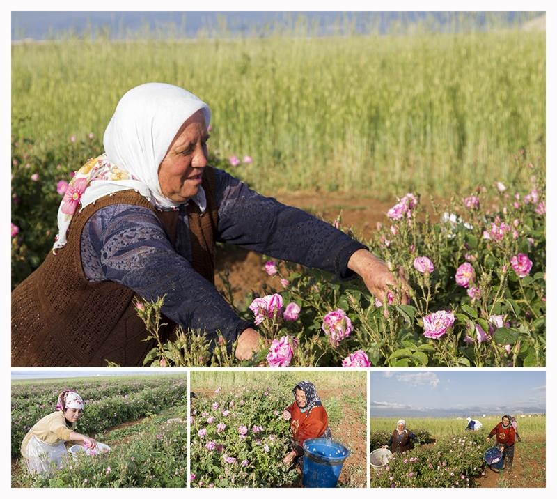 Turkish Roses