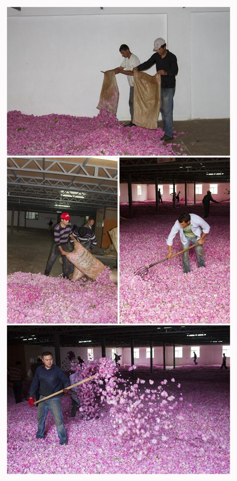 Turkish Roses - Factory