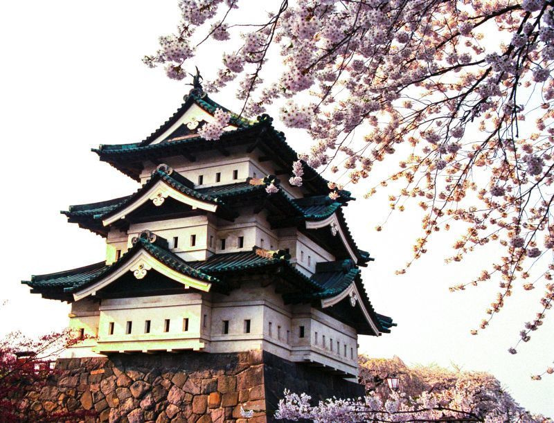 Cherry Blossom Time Japan