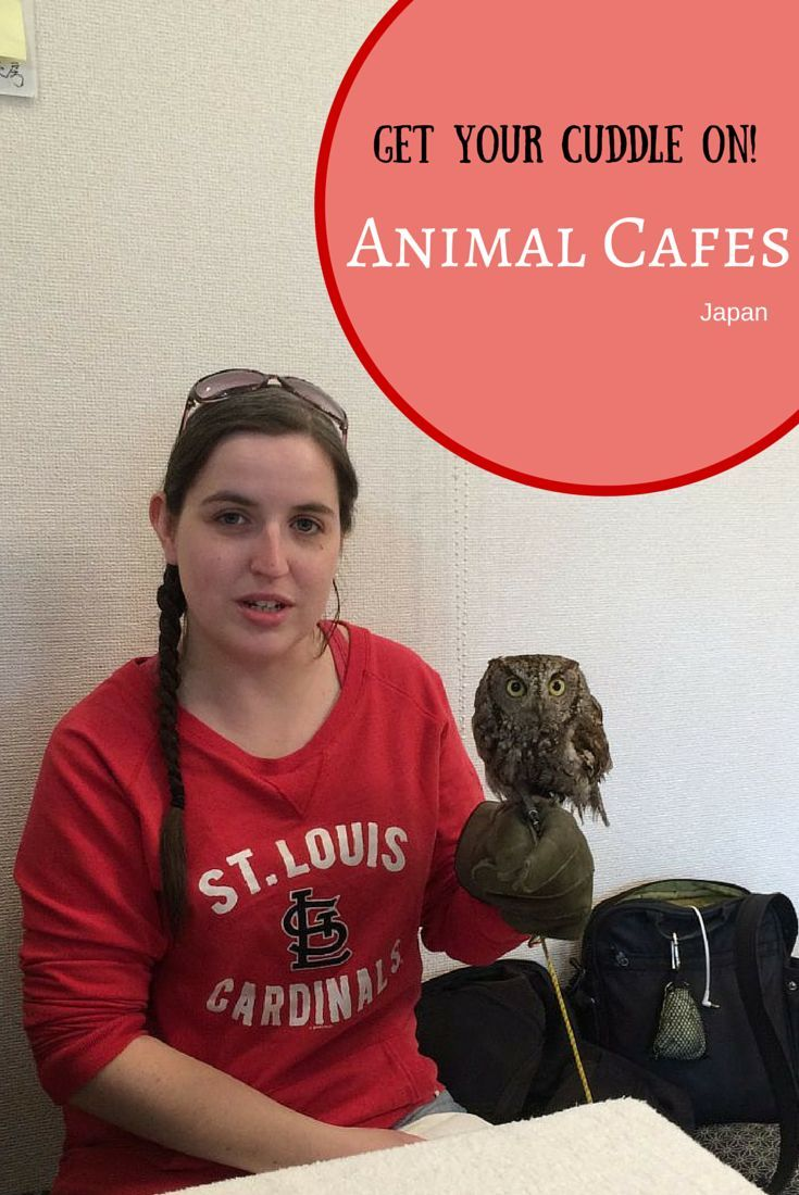 Missing your pet while you travel? go to an animal café Japan!