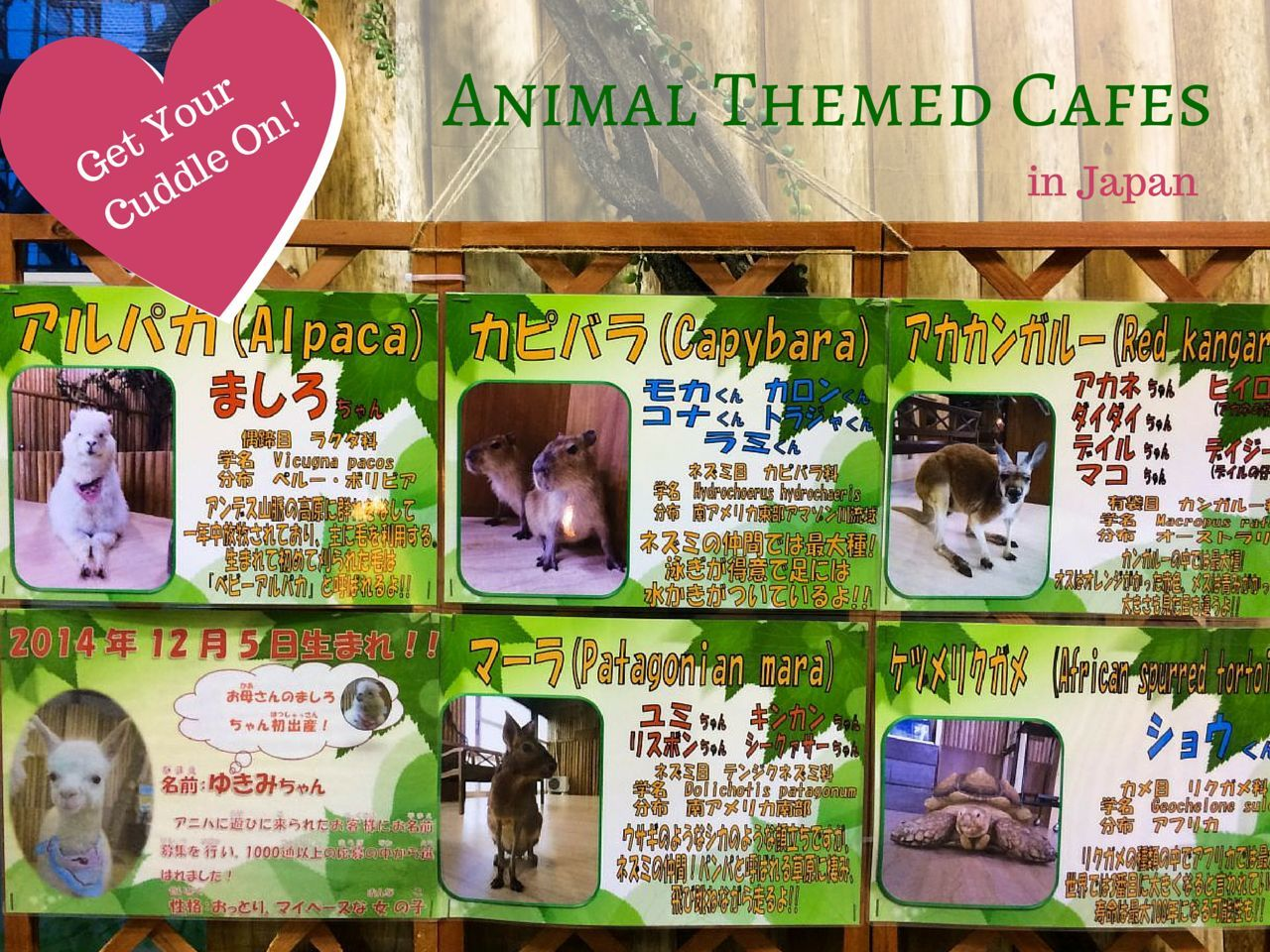 Animal Cafes in Japan