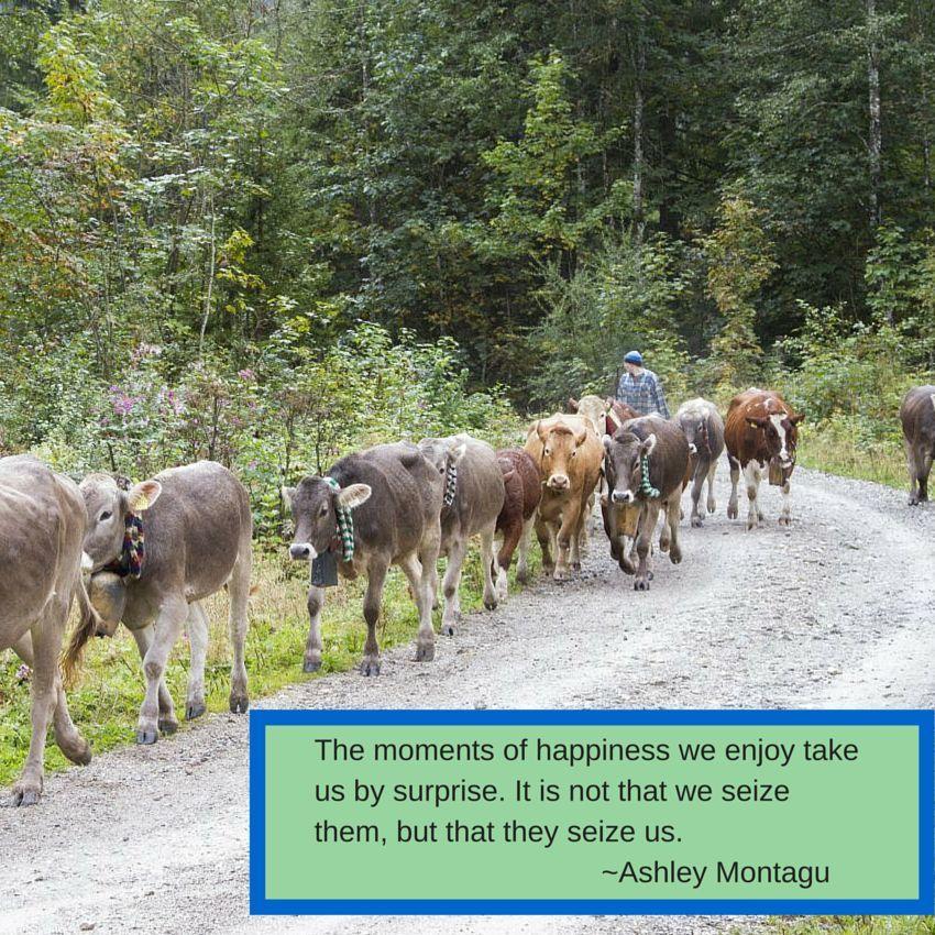 Weekend Travel Inspiration Montagu