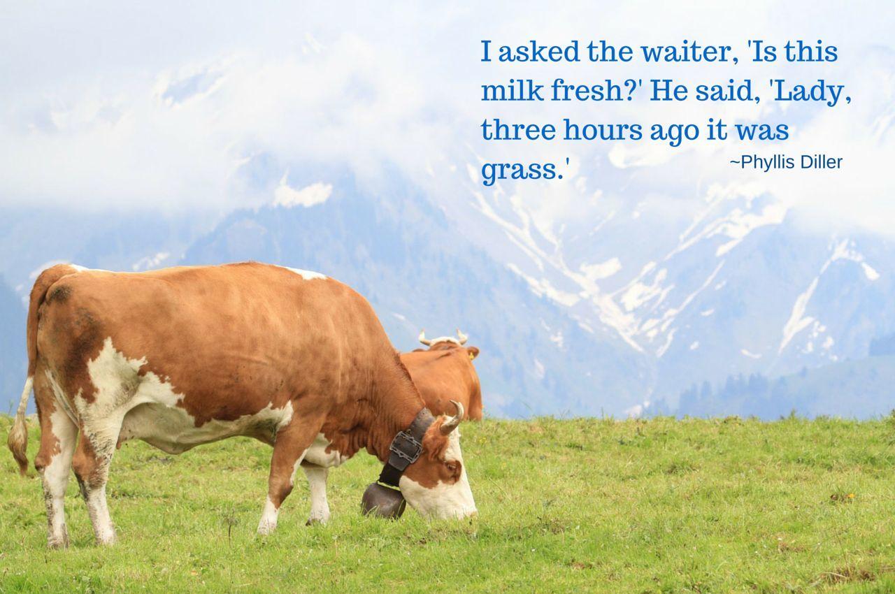 The Milk Machine of Ljubljana Slovenia