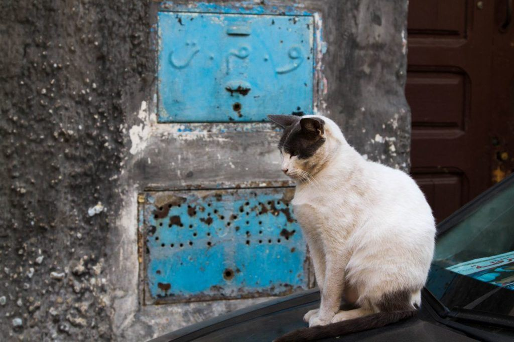 The pretty blue contrasts with a gorgeous gray and white cat sitting on the wall in Chefchaouen.