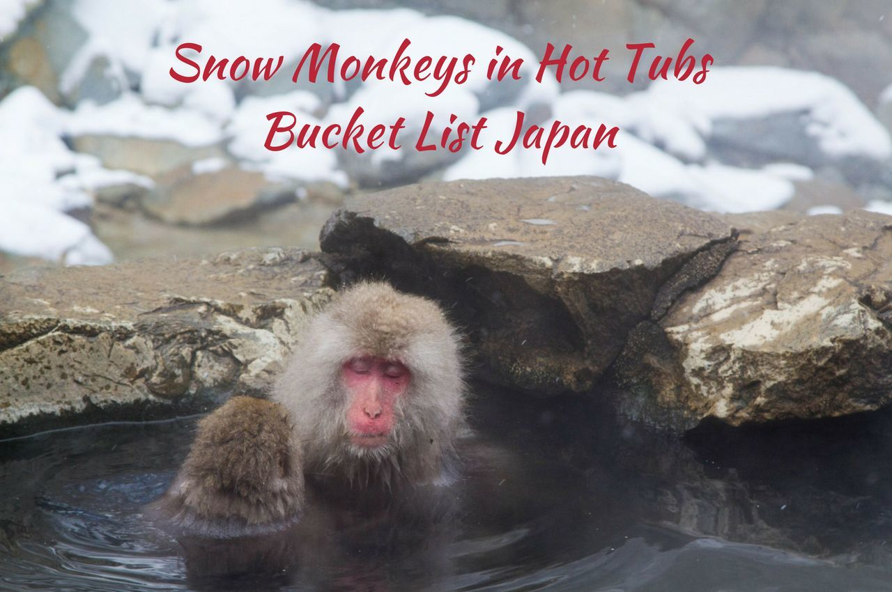 Snow Monkeys in Hot Tubs - Bucket List Japan