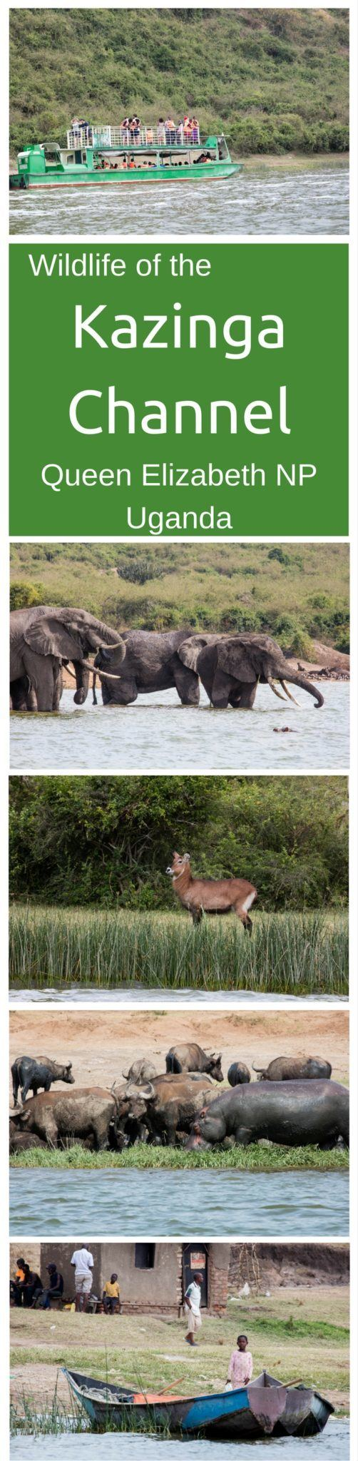 Have you even taken a safari boat cruise? We promise, it's the best way to see wildlife! Click here to find out much more!