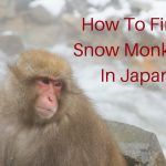 How To Find the Snow Monkeys In Japan