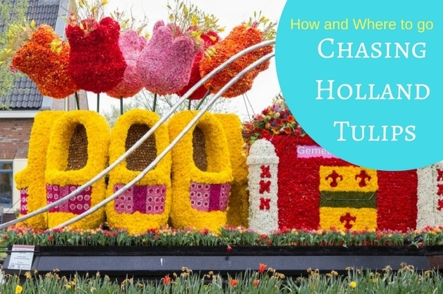 How And Where To Go - Chasing Holland Tulips