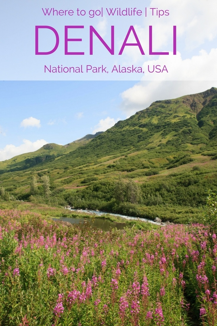 Planning a trip to Alaska? No trip is complete without a visit to Denali National Park and Reserve!