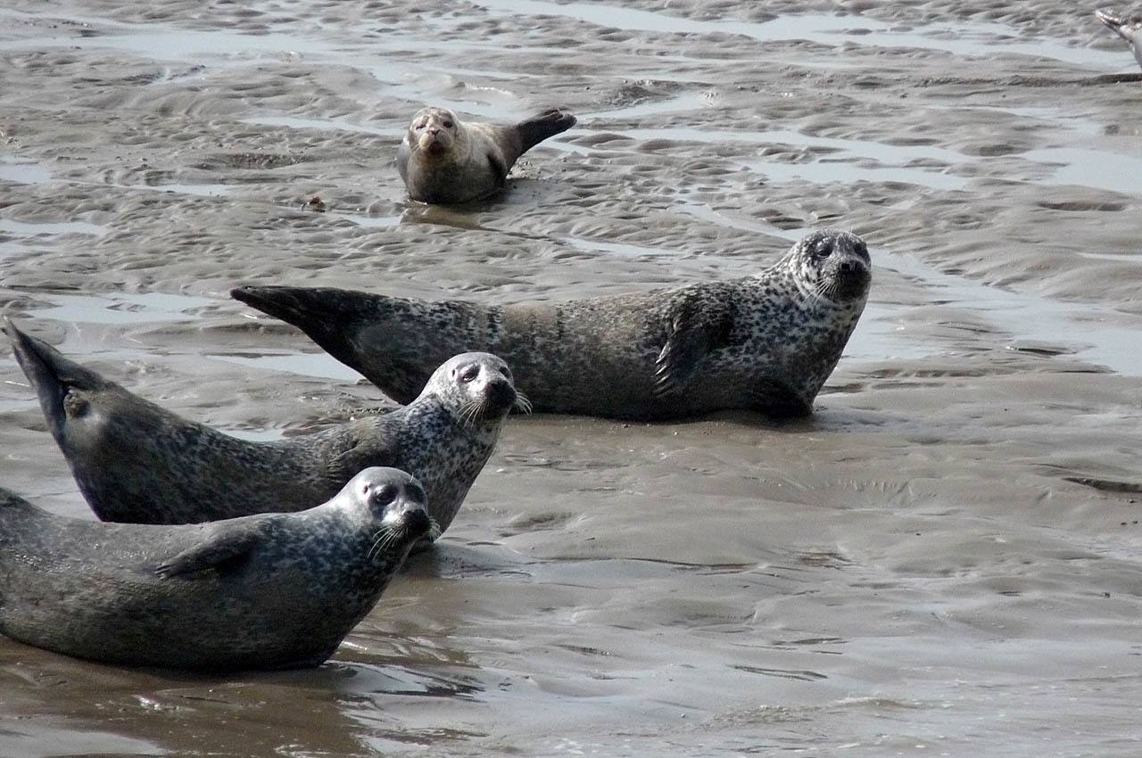 Harbor seals seen from the Donegal Bay tour