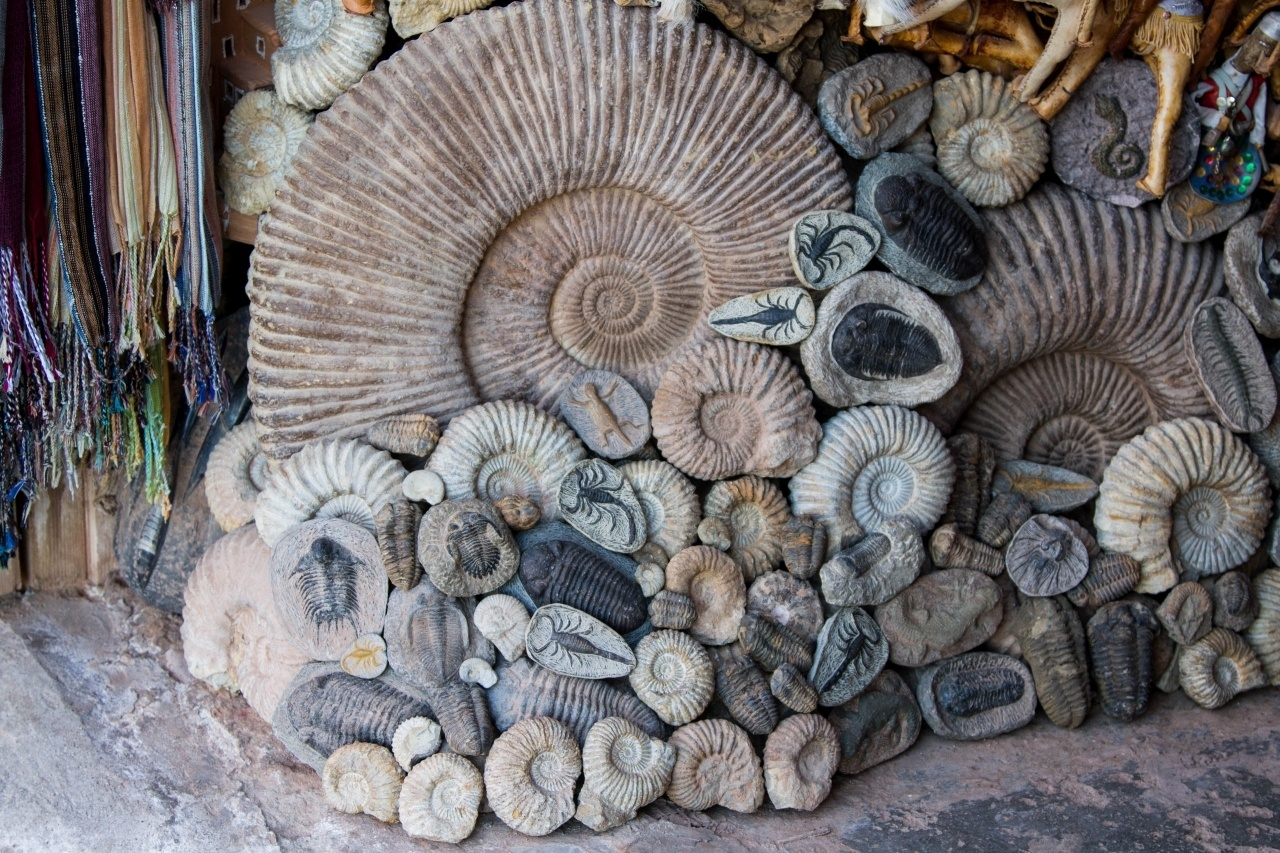 Fossils of all sizes being sold in Ait Benhaddou