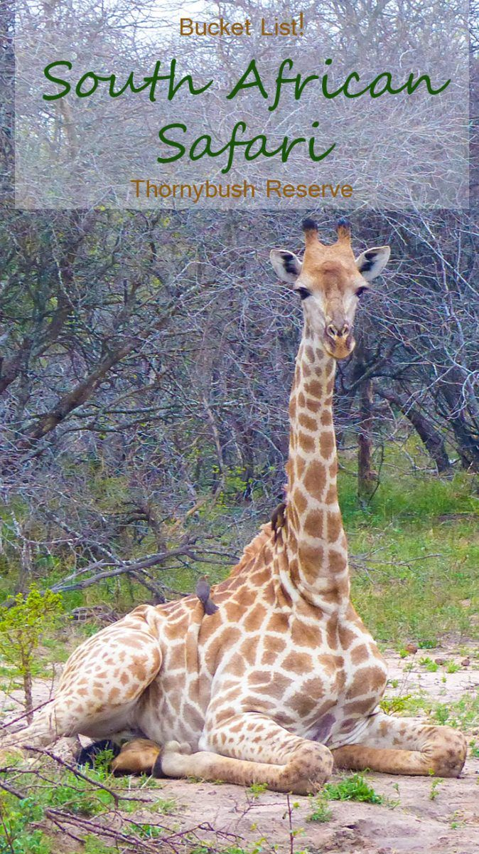 Chasing the Big 5 animals in South Africa at Thornybush Game Reserve.