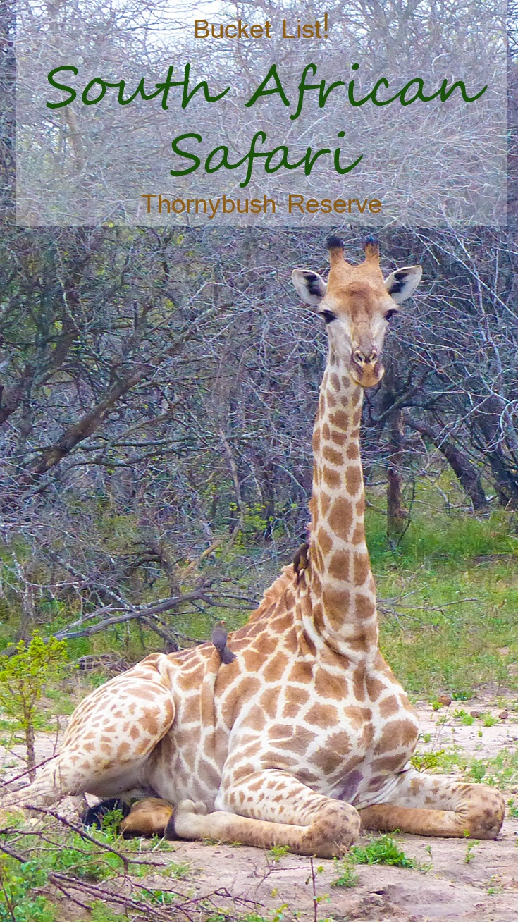 Chasing the Big 5 animals in South Africa at Thornybush Game Reserve