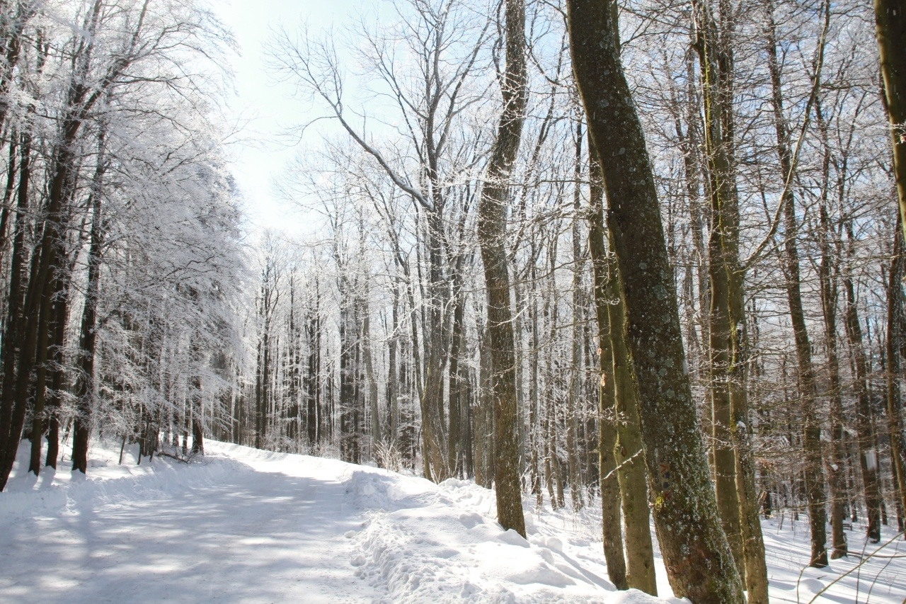 A snow covered path and trees with ice on the branches