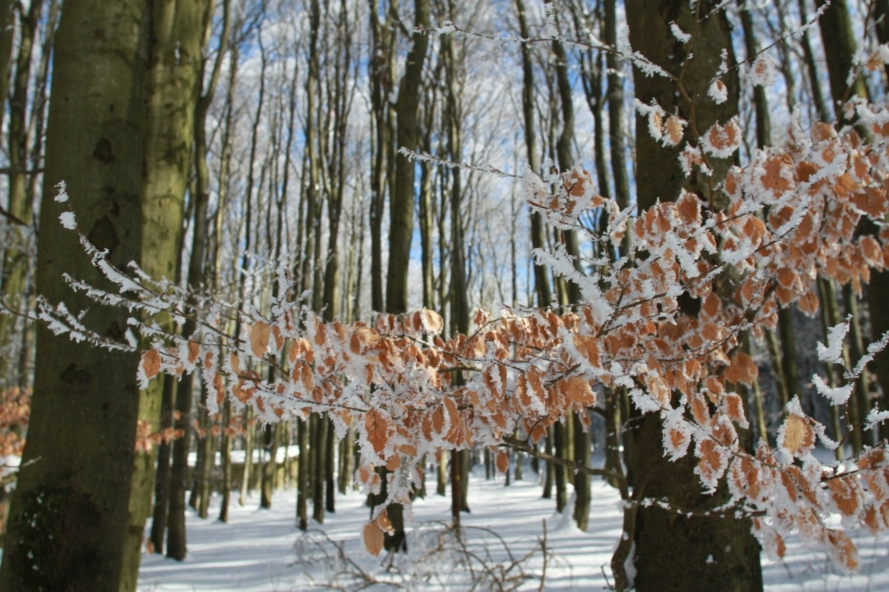Snow and ice cling to brown leaves