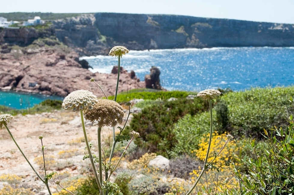 Flowers, rocky coast, and azure waters in Menorca.