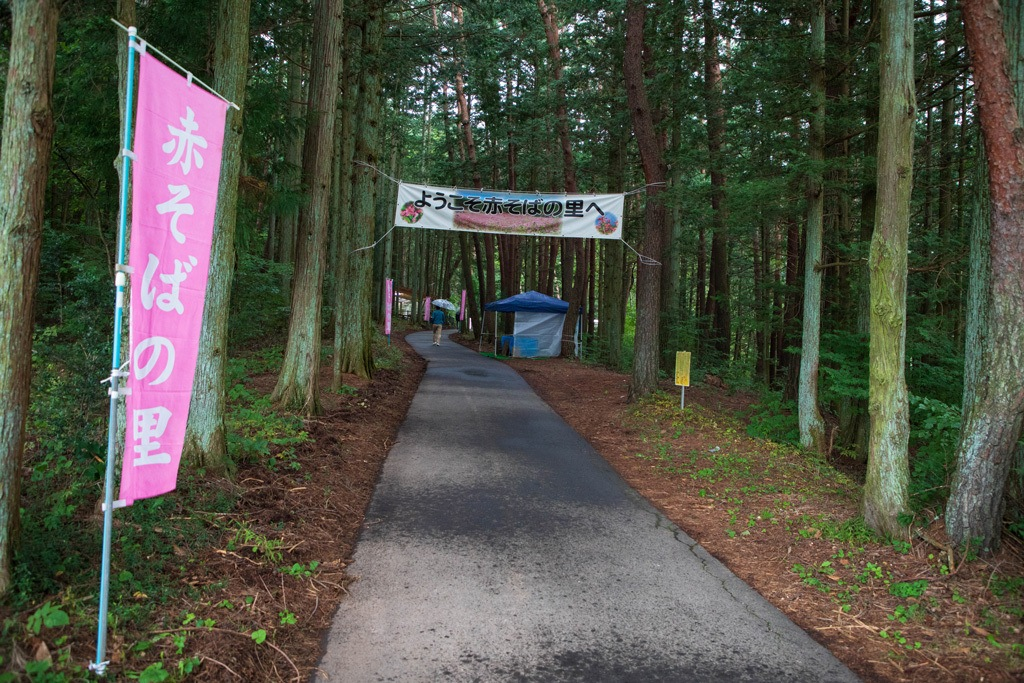 "These vibrant pink banners sporting the word ""soba"" in hirogana led us all the way to the entry of the beautiful maroon fields of the red buckwheat flowers."
