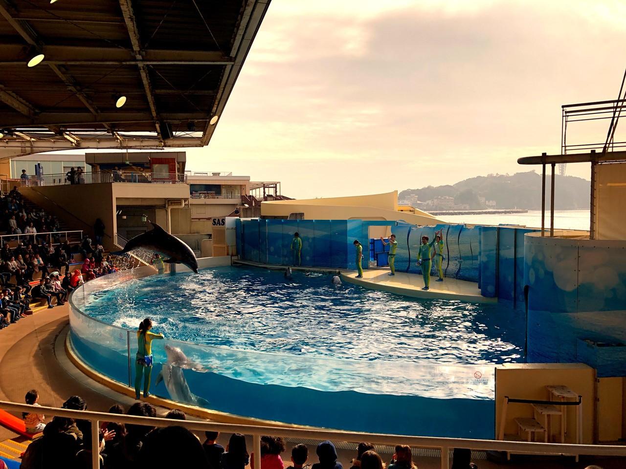 Enoshima Aquarium dolphin show