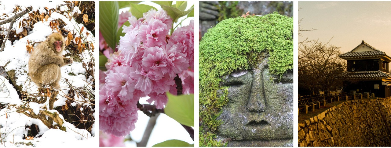 4 seasons on Japan, snow monkey in winter, cherry blossoms in spring, green mossy statue in summer, sunset of castle wall in fall