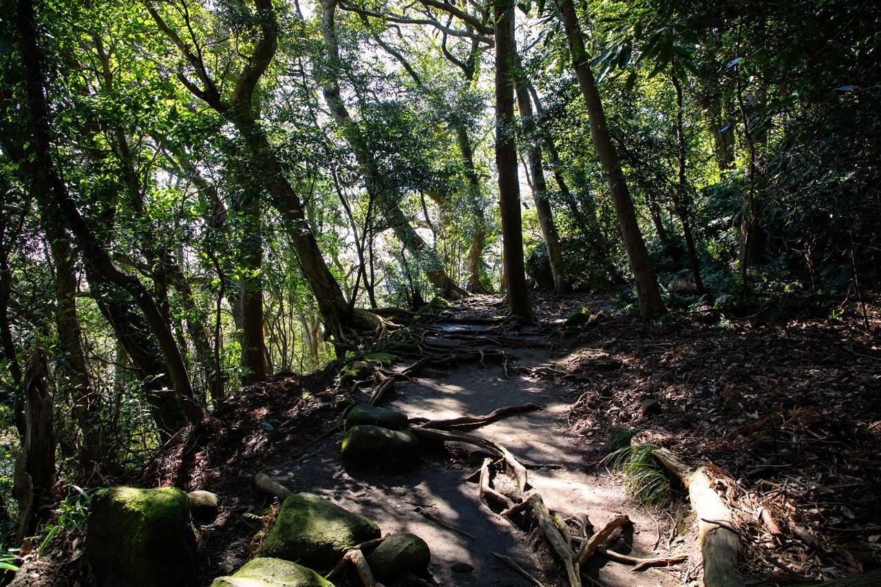 Rooted Path on Mt. Nokogiri