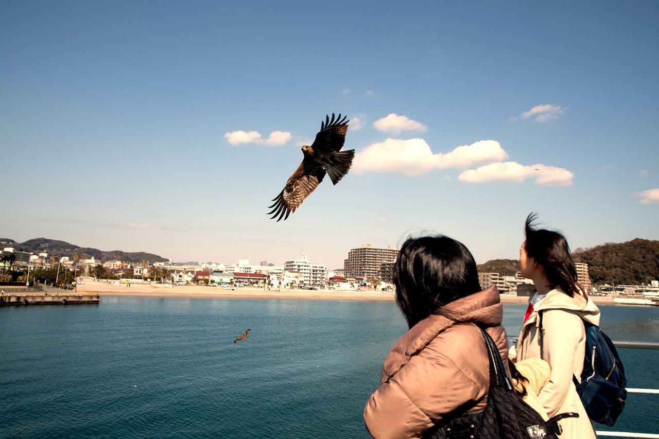 Sea eagles off the stern