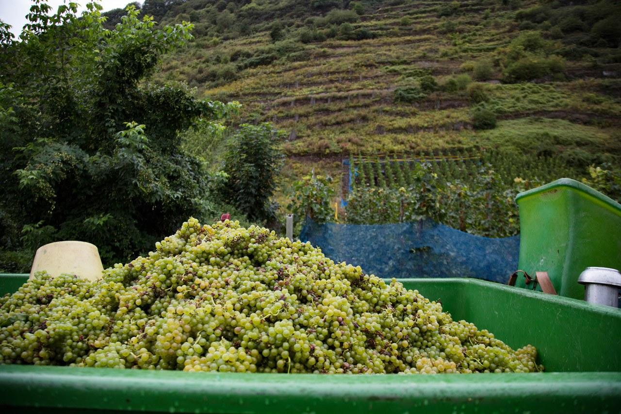Бернкастель Винный фестиваль - все начинается с винограда Круиз по реке Мозель Круиз по реке Мозель и очаровательная однодневная поездка Бернкастель Bernkastel 1 13