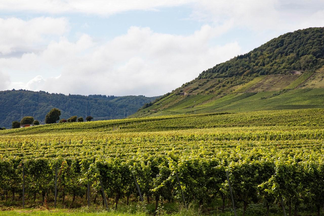 Круиз по реке Мозель с видом на виноградники Круиз по реке Мозель Круиз по реке Мозель и очаровательная однодневная поездка Бернкастель Bernkastel 1 30