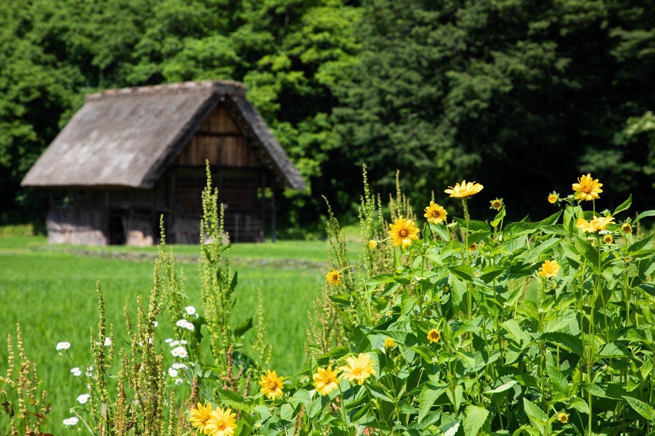Summer flowers and a gassho zukuri barn