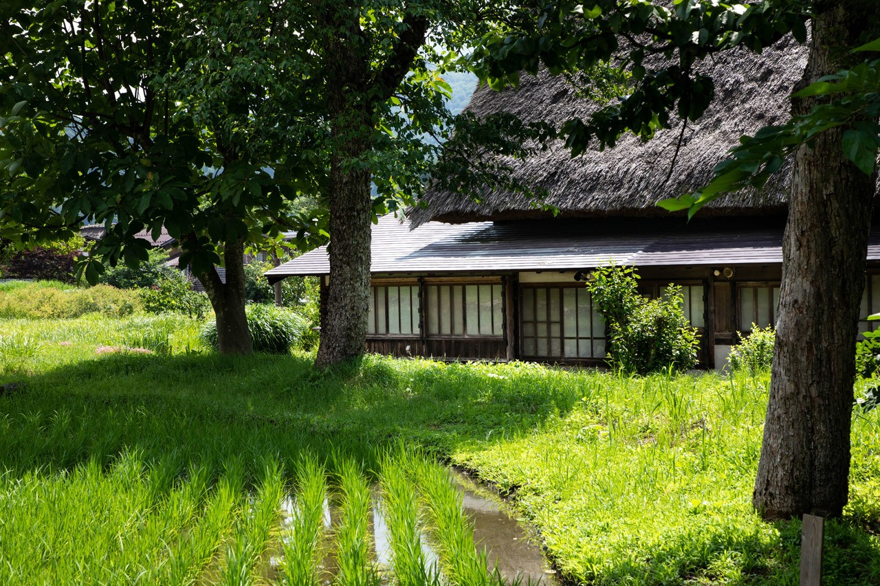 Rice paddy and traditional house with a Japanese roof
