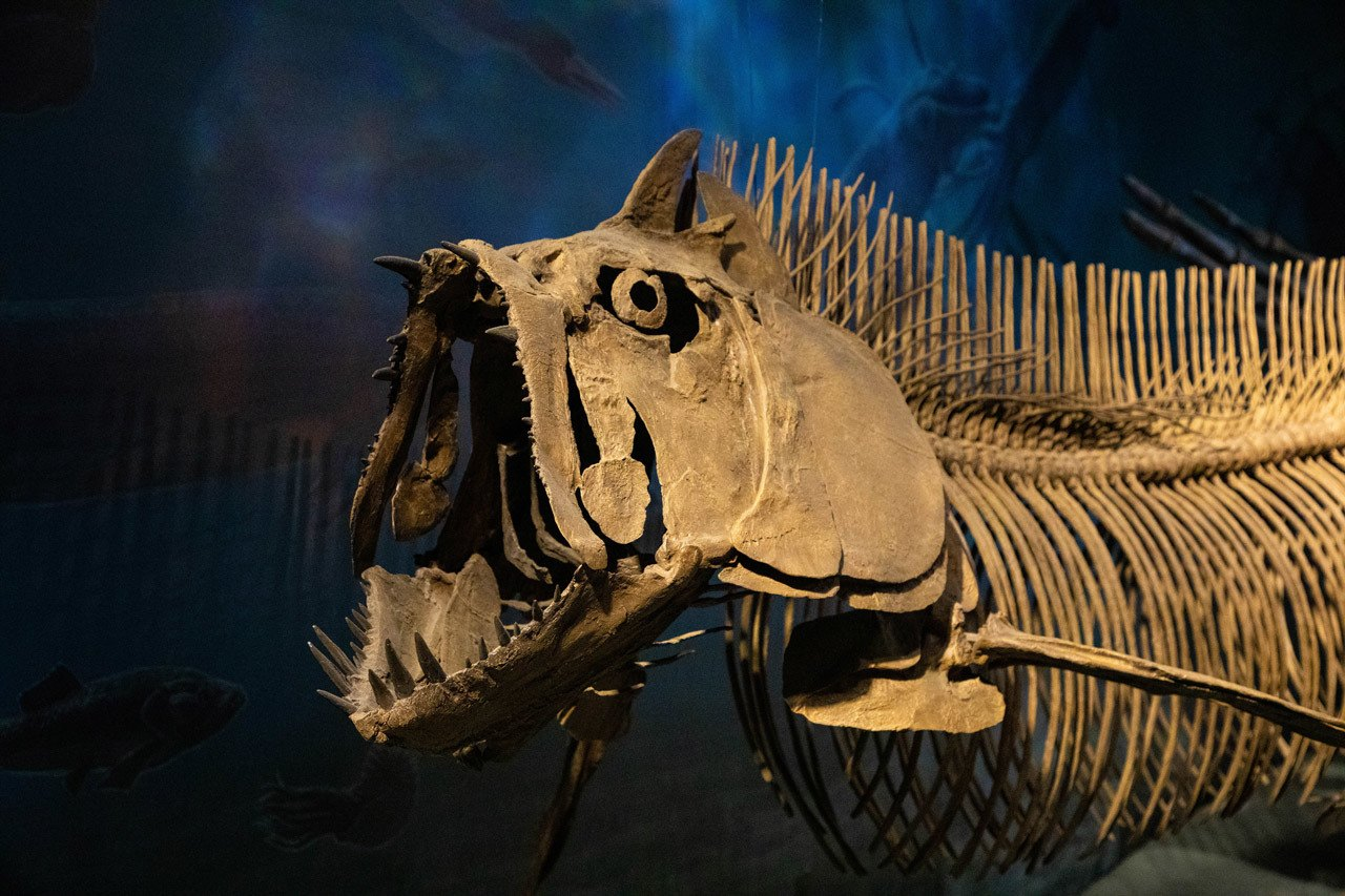 The dinosaur exhibit at the North Dakota Heritage Center and Museum is a really good reason to visit North Dakota.