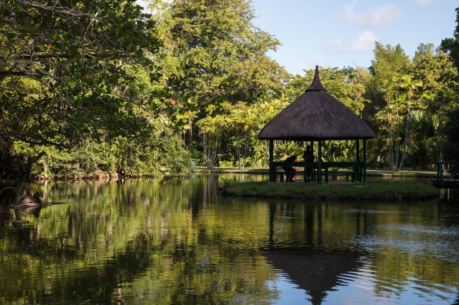 Беседка в ботанических садах обеспечивает этой паре тень и отдых. Чем заняться на Маврикии Чем заняться на Маврикии – Путешествие к звезде и ключу Индийского океана SSR Botanical Garden Mauritius 1600x1066
