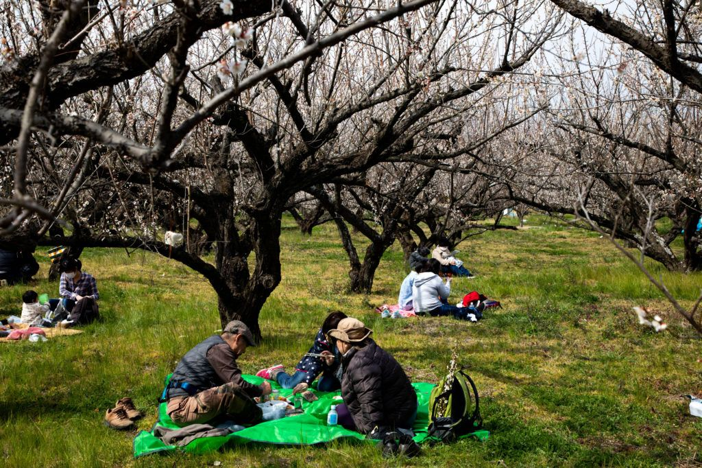People picnicking under the plum trees.