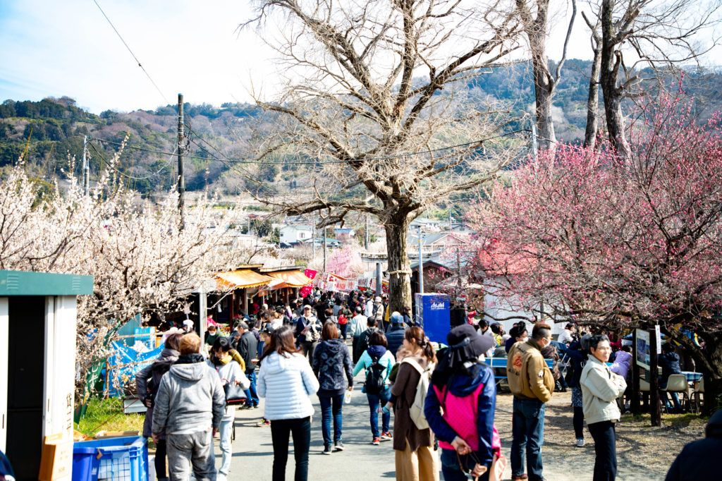 People, vendors, and plum blossoms.