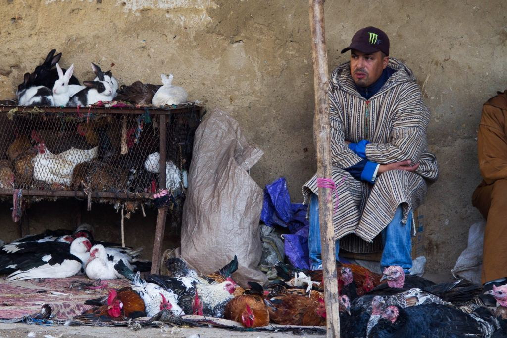 Rabbits for sale for food in Fez.